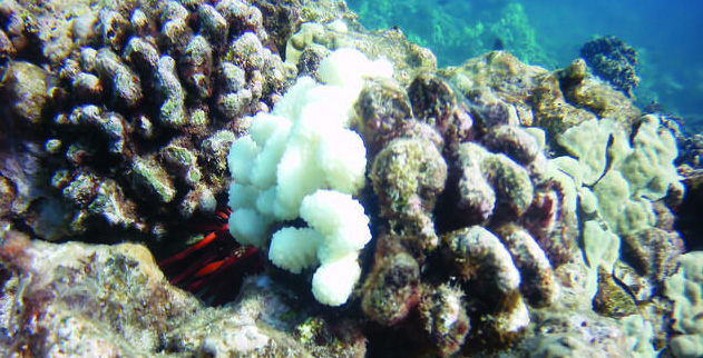 4b0c5a668b6c Scientists Are  Thrilled  to Report That Hawaiian Coral Reefs Are Finally  Stabilizing After Mass Bleaching